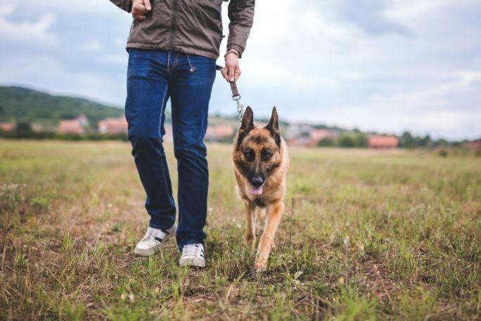 How to train German Shepherd off-leash for hiking